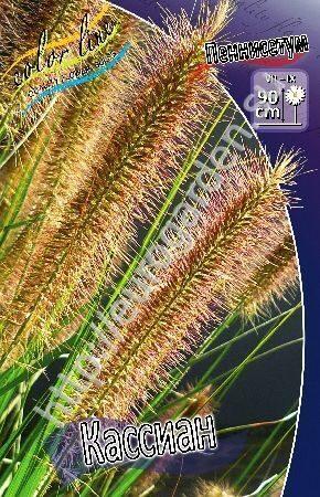 перистощетинник лисохвостный фото